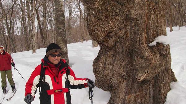 スノートレック/スキーを履いて森を歩く