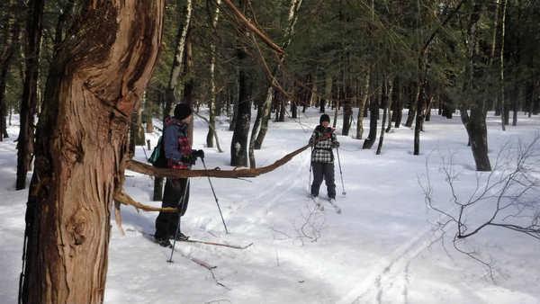 スノートレック/雪の森