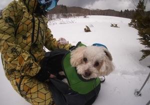 ワンコとスキーでお散歩ツアー